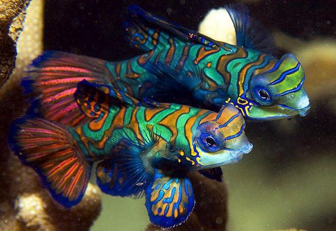 Палау-подводное чудо света-6