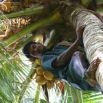<b>Кокосовые острова: погружение в природу</b>