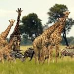 Достопримечательности ЮАР: Крюгер