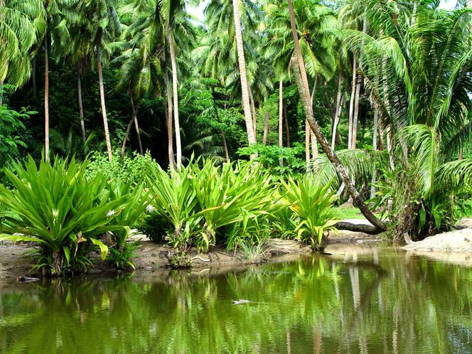 Национальные парки Нигерии-15
