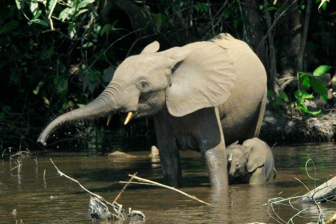 Национальные парки Нигерии-16
