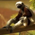 Потрясающий Мадагаскар