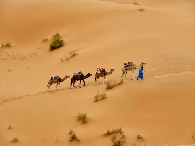 Жемчужины Западной Сахары-13