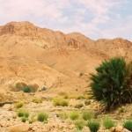 Жемчужины Западной Сахары-7