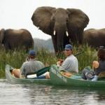 Замбия – буйство красок и впечатлений