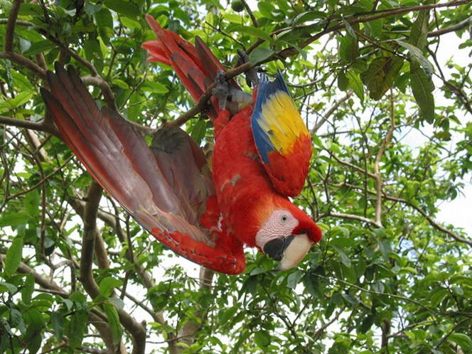 Кокосовые острова отдых и только отдых-14
