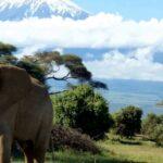 Авторские туры: незабываемый отдых на Занзибаре